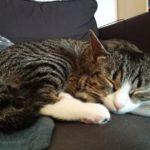 Katze schlafend auf Sofa