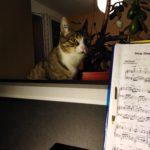 Katze sitzt hinter dem Klavier